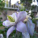 Floral Treasures by Jennifer  Gaillard