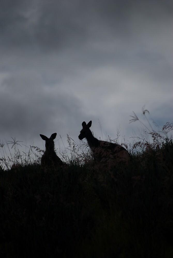 Kangaroos enjoying an early breakfast - Hunter Valley NSW by Sevenish
