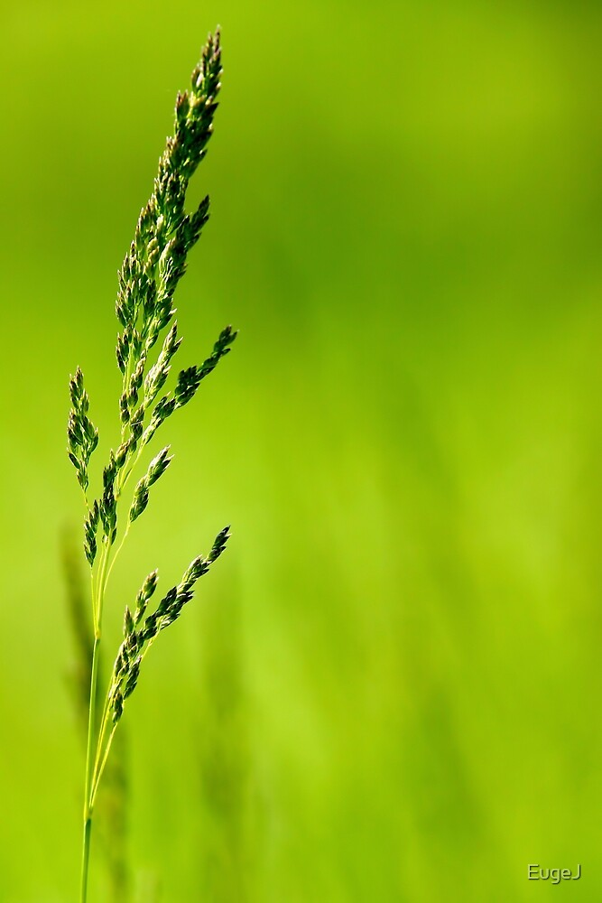 I Know Why The Grass Is Green by EugeJ
