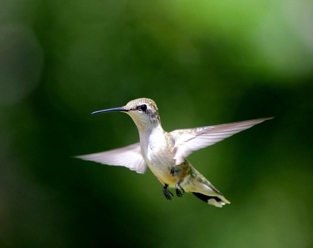 Hummingbird by Jill Bernier