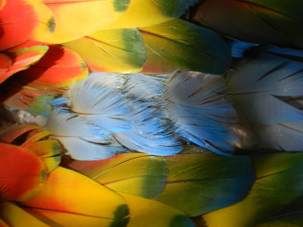 Macaw Feathers by Fjfichman