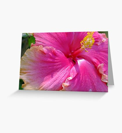 Delicious Hot Pink Hibiscus Greeting Card