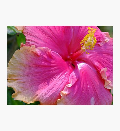 Delicious Hot Pink Hibiscus Photographic Print
