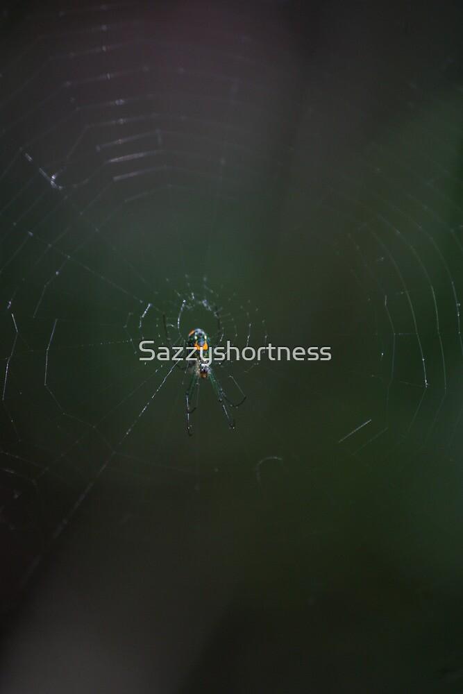 Orchard Orbweaver by Sazzyshortness