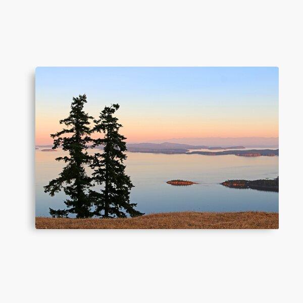 June Evening on Brown Ridge Saturna Island Canvas Print