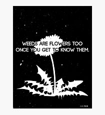 Weeds are Flowers Too Photographic Print