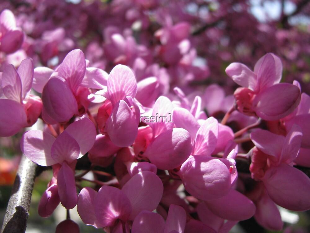 A macro at the Pink tree! by rasim1