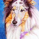 Collie - blue merle -B by doggyshop