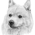 Norwegian buhund by doggyshop