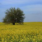Field of Yellow by BransonPhotos