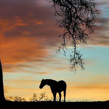 Beautiful Solitary Horse and Oak Tree With A Southwestern Colored Sky by LazyL