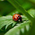 Ladybird by Lee Jones