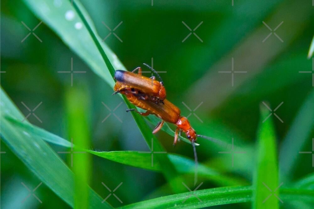 Bug Love by Lee Jones