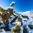 Joshua Tree National Park Snow Day by photosbyflood