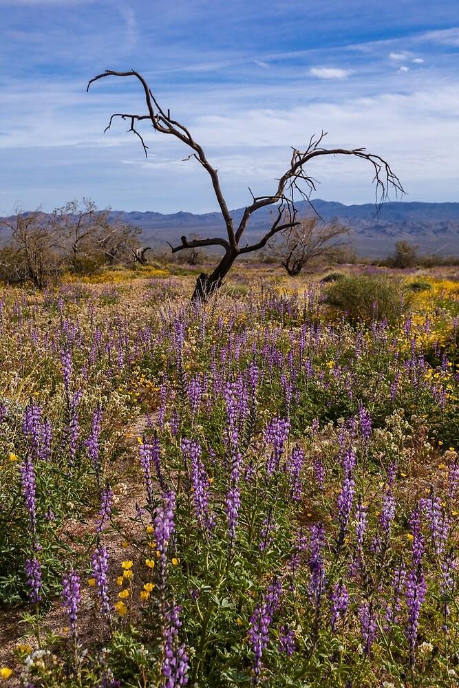 Joshua Tree National Park Life and Death by photosbyflood