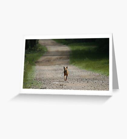Trail Riding Dog  Greeting Card
