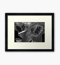 Nature Without Color. Framed Print