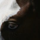 Horses eye - Blue eyes by Vikki Shedden Photography