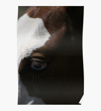 Horses eye - Blue eyes Poster