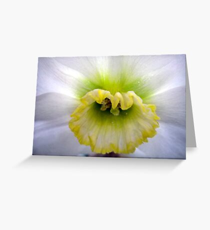 Daffodil Cup Greeting Card