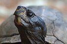 Tortoise by WorldDesign