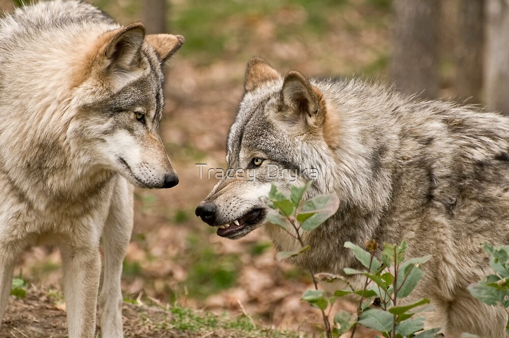 A little Trouble Brewing! by Tracey  Dryka