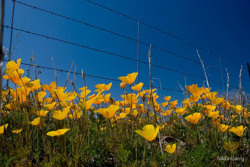 Desert Wildflowers by NikonLarry