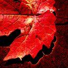 Autumn Red by Rinaldo Di Battista