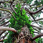 Branching Out!! - Big Old Tree by Phil Le Cren