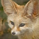 Fennec Fox by Fjfichman