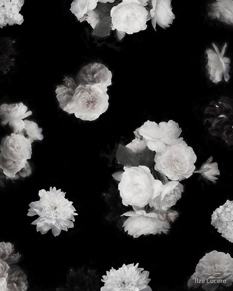 «Rosas de jardín blanco y negro» de Ilze Lucero