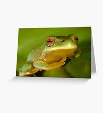 Litoria chloris Greeting Card