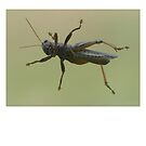 Grasshopper by Fjfichman