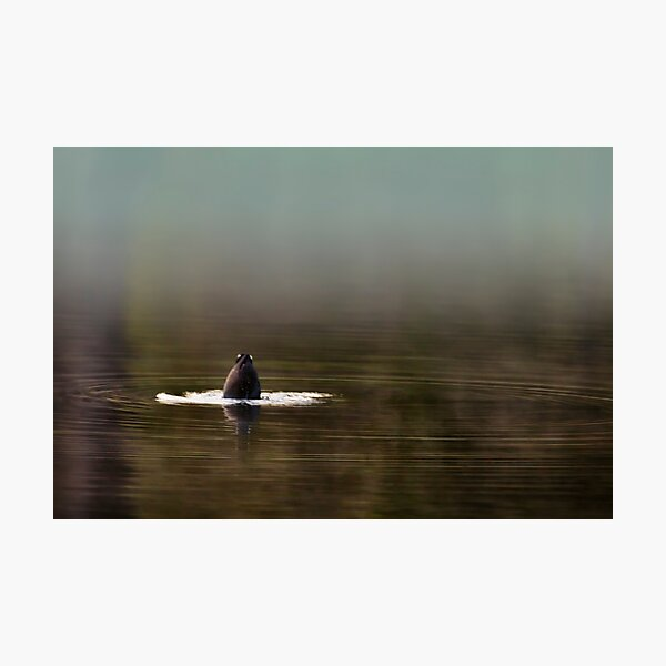 Duck Dive Photographic Print