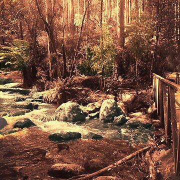 Toorongo River, Noojee by rozmcq