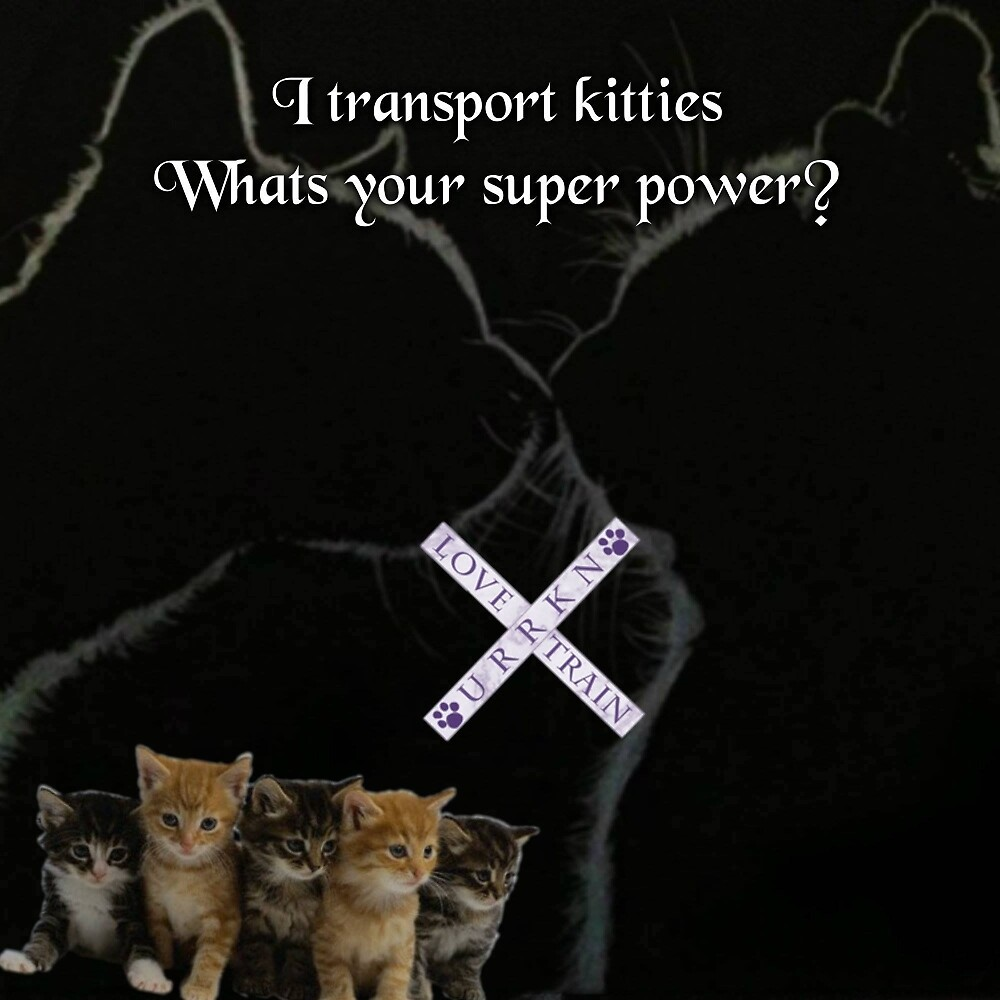 I transport Kitties. Whats your superpower? by URRKN