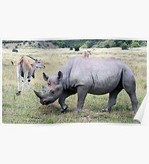 Rhinocerous 11 Poster
