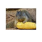 A Squirrel and its Corn by Fjfichman