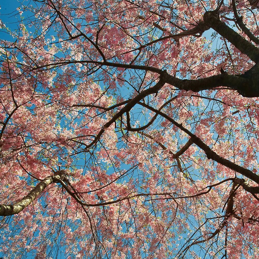 Cherry Sky by Jean-Pierre Ducondi