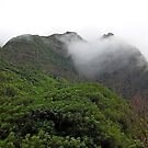 Iao Valley State Park Study 1  by Robert Meyers-Lussier
