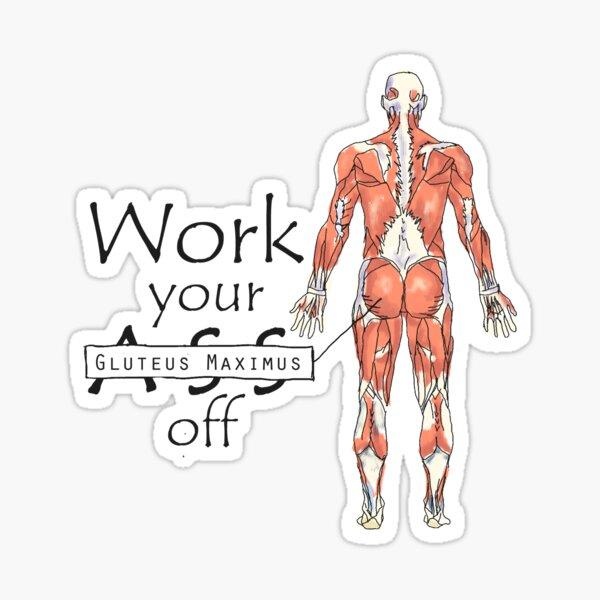 Work your Gluteus Maximus off Sticker