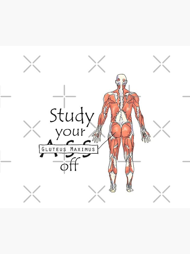 Study your Gluteus Maximus Off  by maryhop