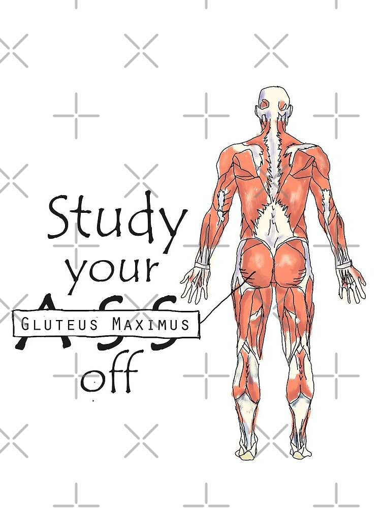 Estudia tu Gluteus Maximus Off de maryhop