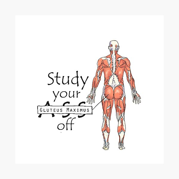 Study your Gluteus Maximus Off  Photographic Print