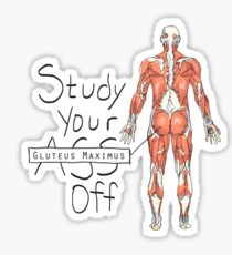 Étudiez votre grand fessier Sticker