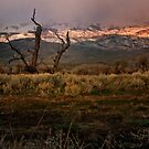 Early morning in Bishop, CA by socalgirl