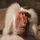 Baboon by Fjfichman