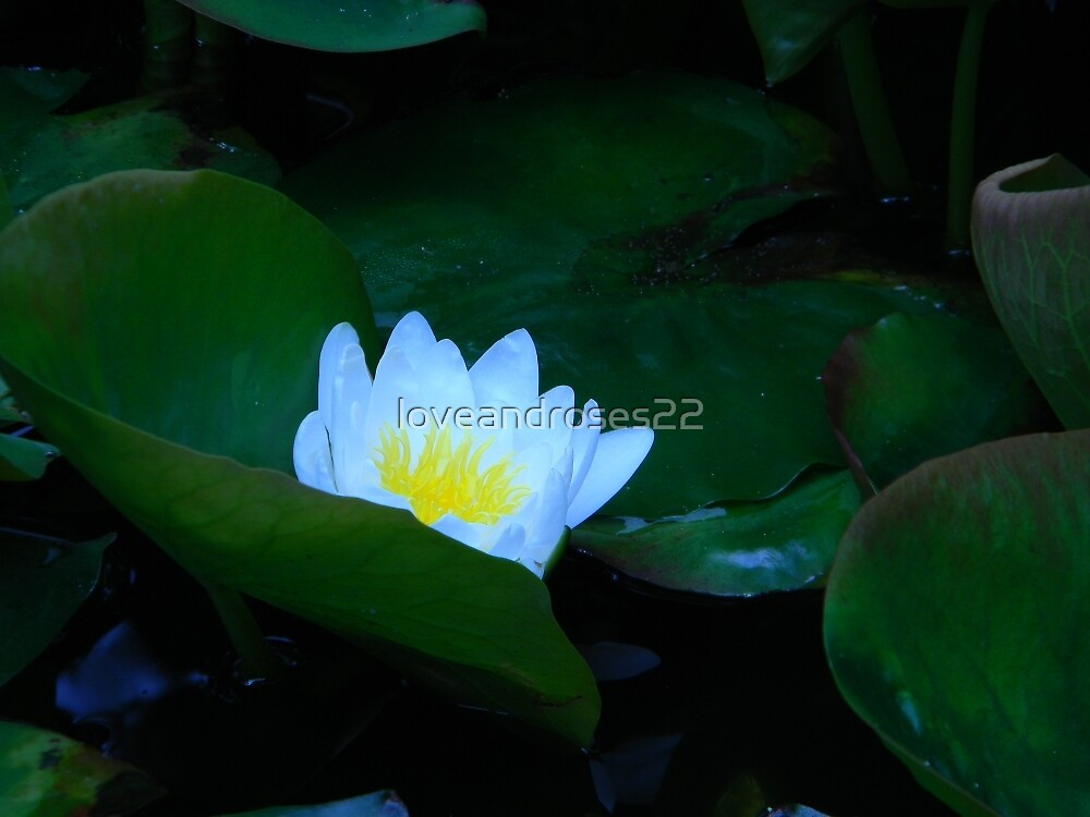 Lily Pad Paradise by loveandroses22