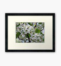 Spring Glory Framed Print