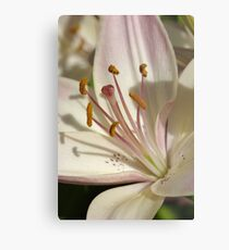 Marlene - Asiatic lily Metal Print